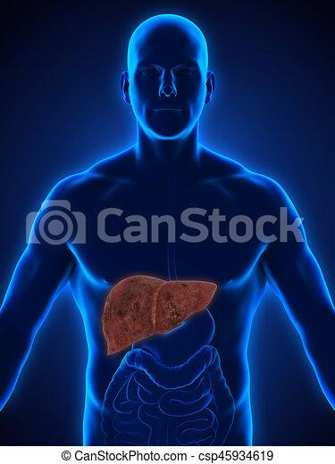 Unhealthy liver anatomy illustration. 3d render.