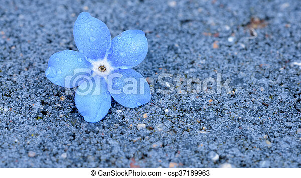 Coloriage Fleur Myosotis.Unique Myosotis Fleur Parfait Fleur Bleue Jardinage Espace