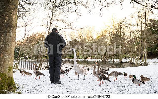 Unrecognisable senior man feeding wild birds , snow covered landscape, Edinburgh, Scotland - csp24944723