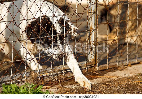 unterstand, alter hund, wohnungslose - csp30031021