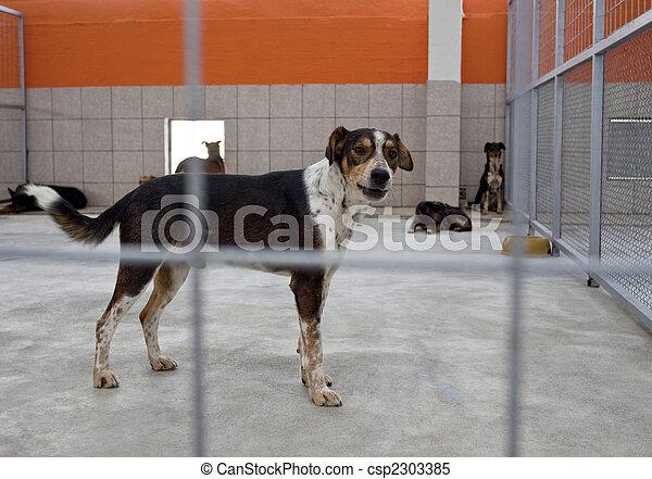 Hund in einem Unterschlupf - csp2303385