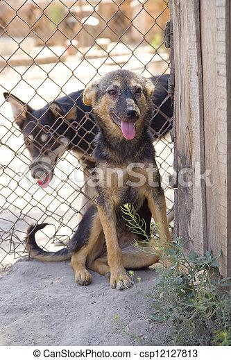 Shelter Hunde - csp12127813