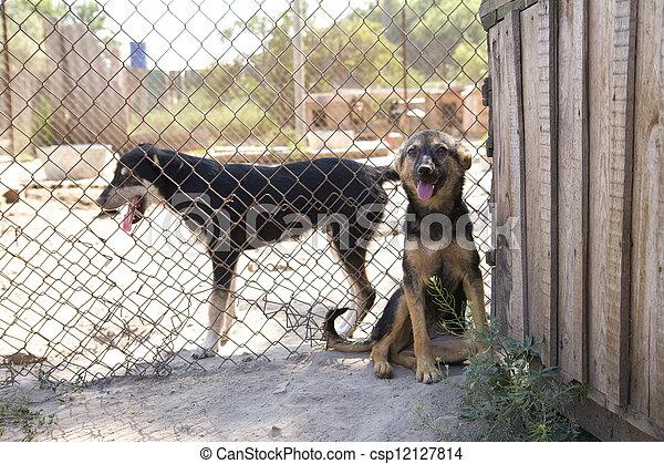 unterstand, hunden - csp12127814