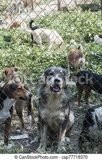 unterstand, hunden - csp77718370