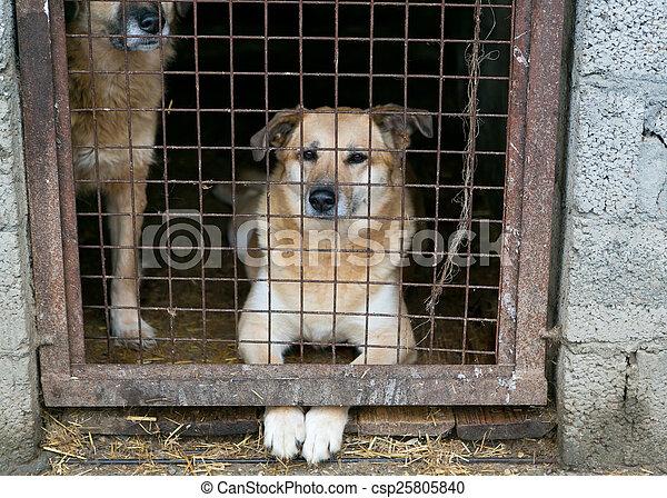 Shelter für obdachlose Hunde - csp25805840