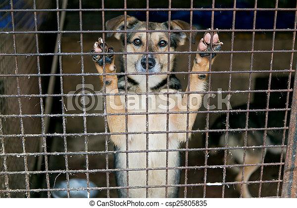 Shelter für obdachlose Hunde - csp25805835