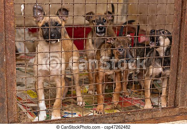 unterstand, junger hund, hunden - csp47262482