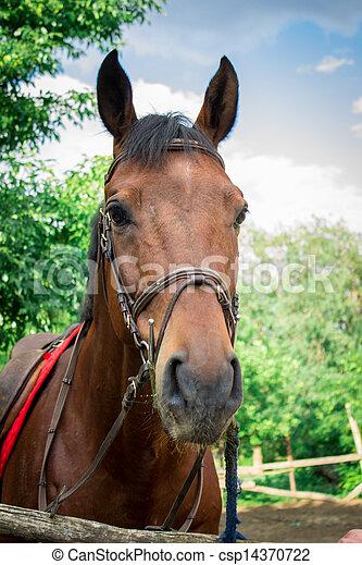 unterstand, pferd - csp14370722
