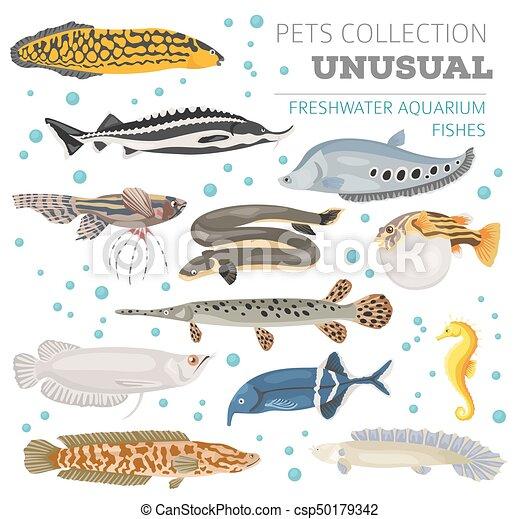 Unusual Freshwater Aquarium Fish Breeds Icon Set Flat Style Isolated