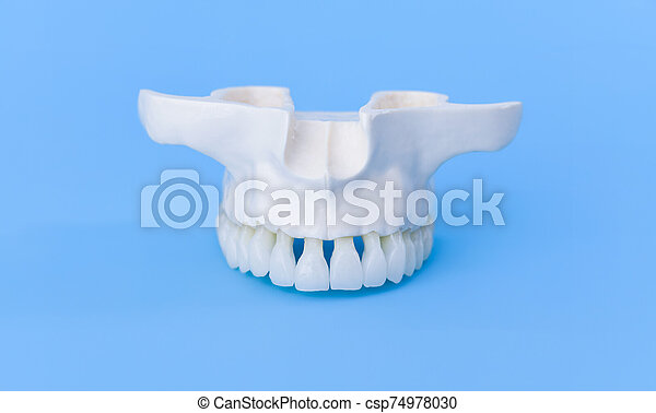 Upper human jaw with teeth - csp74978030