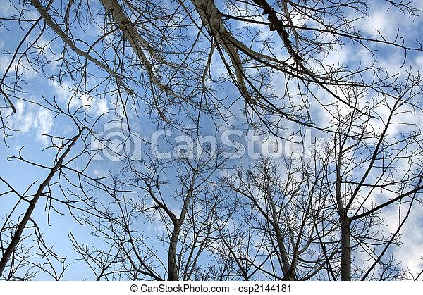Upward look of trees - csp2144181