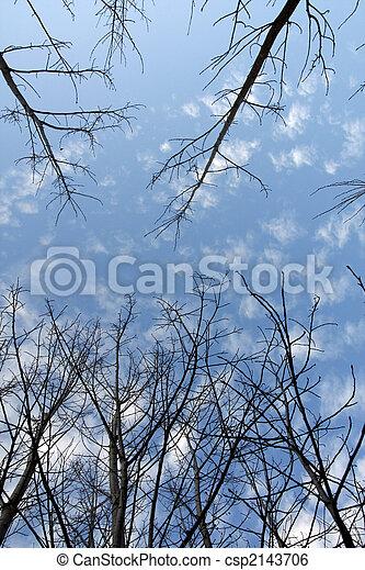Upward look of trees - csp2143706