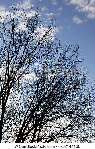 Upward look of trees - csp2144180