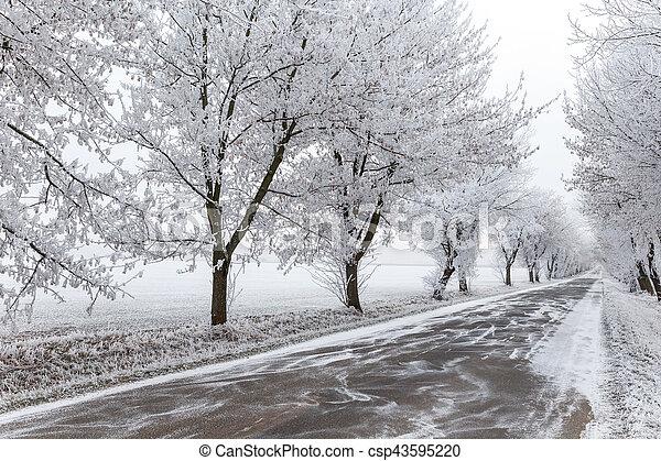 urbano, inverno, cinzento, congelado, árvores, estrada - csp43595220