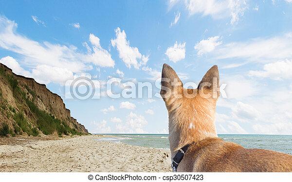 usługiwanie, pies - csp30507423