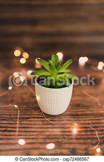 usine succulente, bois, pot, minuscule, sombre, lumières, vert, fée, blanc, tabletopsurrounded - csp72466567