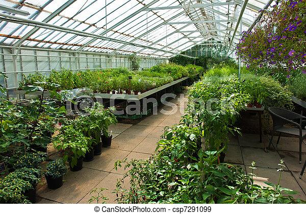 usines, fleurs, intérieur, entiers, serre