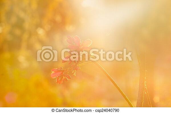 usines, jardin, fleur, sof, vibrant, dry-dried, foyer, doux - csp24040790