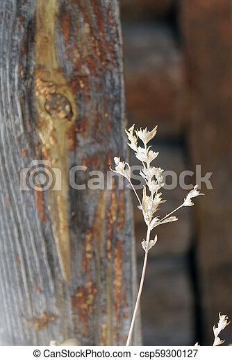 usines, silhouette, peu profond, wood., champ, profondeur, séché, fond, fleurs - csp59300127
