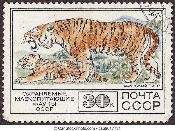 """USSR - CIRCA 1977: A post stamp printed in USSR shows white siberian tigers, with the inscription in russian """"protected mammal of  ussr fauna"""". circa 1977 - csp9017731"""