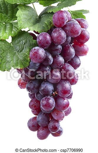 uva, aislado, vino rojo - csp7706990