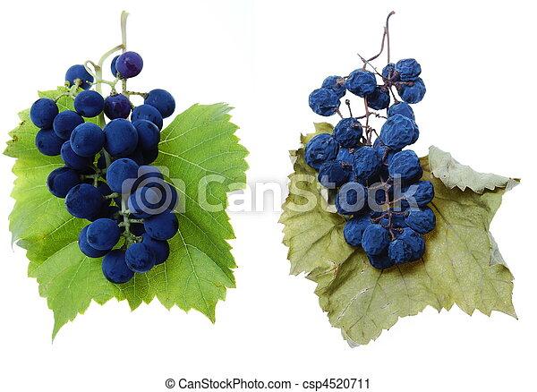 Uva azul y raisin con hojas - csp4520711