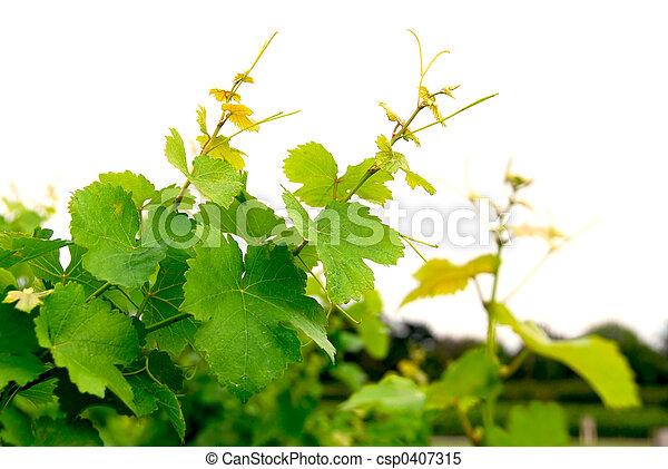 Viñas de uva - csp0407315