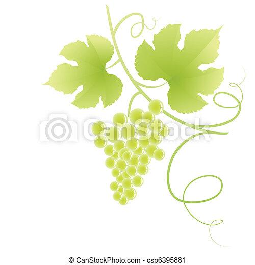 Viña de uva. - csp6395881