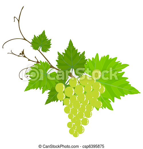 Viña de uva. - csp6395875