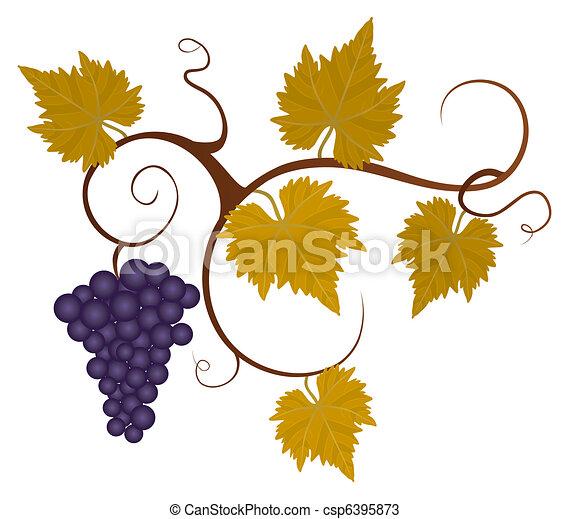 Viña de uva. - csp6395873