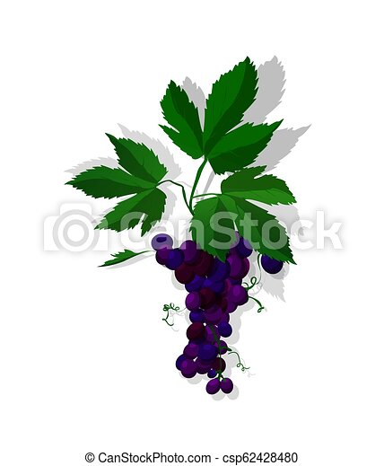uvas rojas - csp62428480