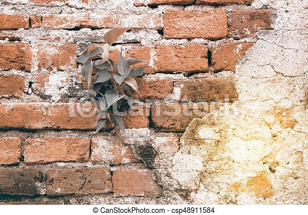 vägg, bakgrund., tegelsten, gammal, struktur - csp48911584