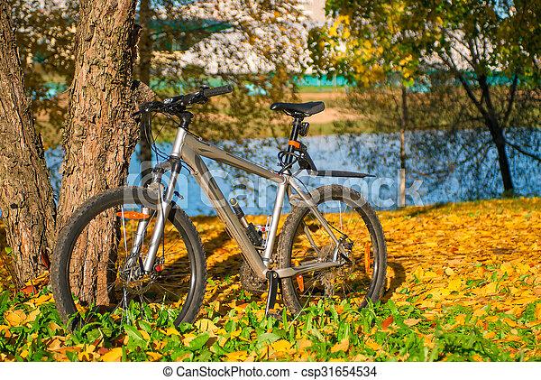 vélo, ensoleillé, parc, arbre, automne, garé, jour - csp31654534