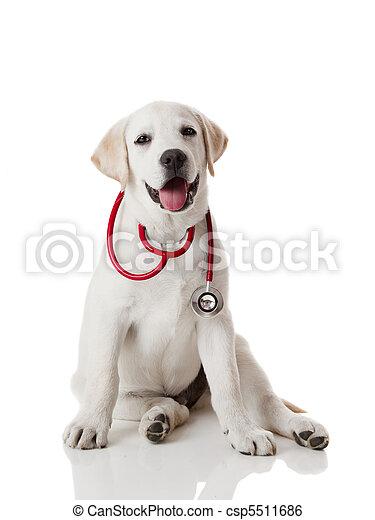 vétérinaire, chien - csp5511686