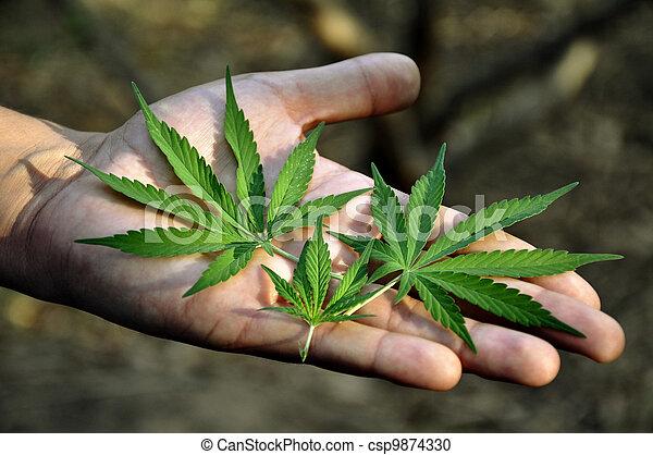 vício, marijuana - csp9874330