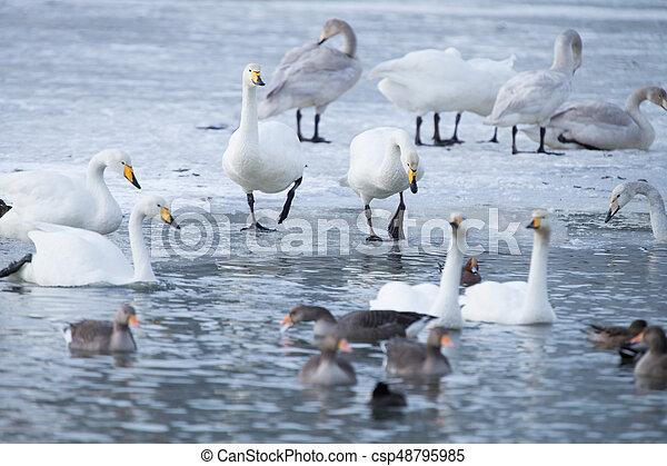 vízi madár - csp48795985