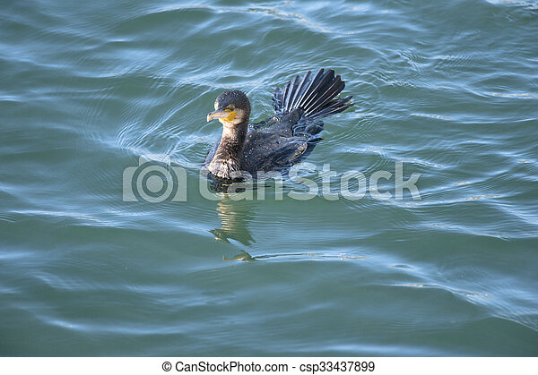vízi madár - csp33437899