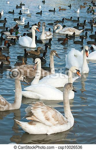 vízi madár - csp10026536