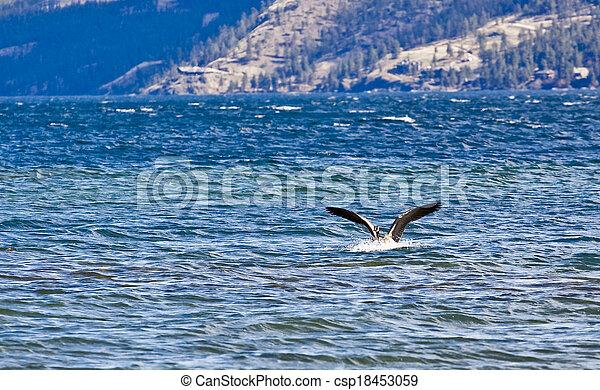 vízi madár - csp18453059