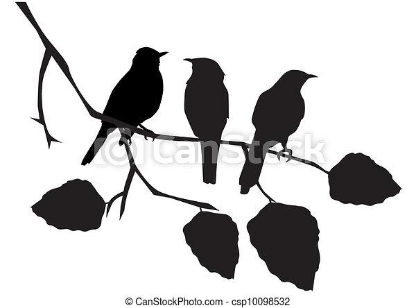 vögel - csp10098532