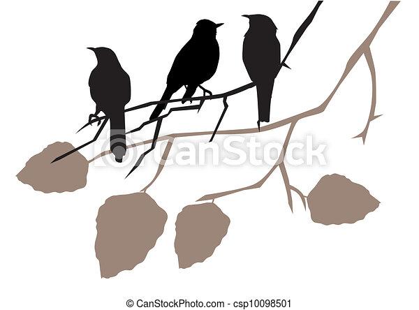 Vögel - csp10098501
