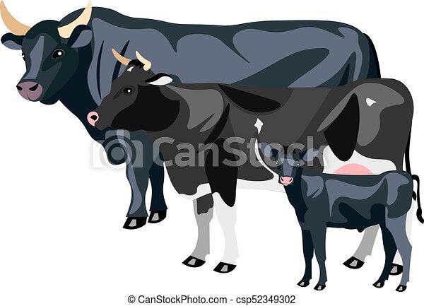 Vaca y toro aislados - csp52349302