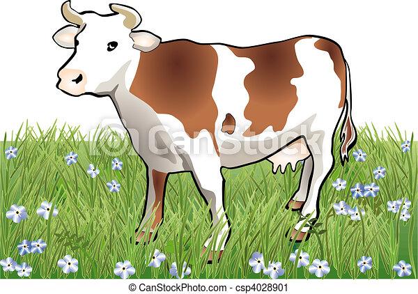 Vaca - csp4028901