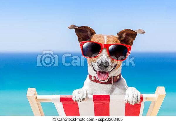 Perro de vacaciones de verano - csp20263405