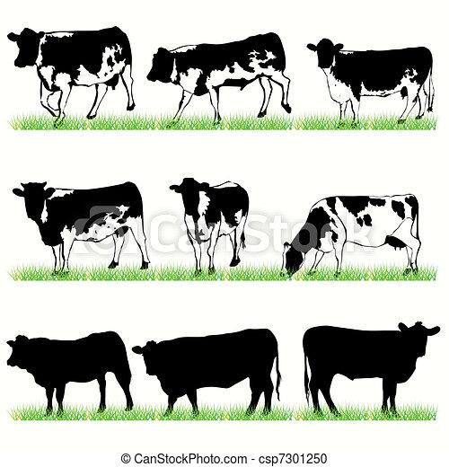 9 vacas y toros siluetas puestas - csp7301250