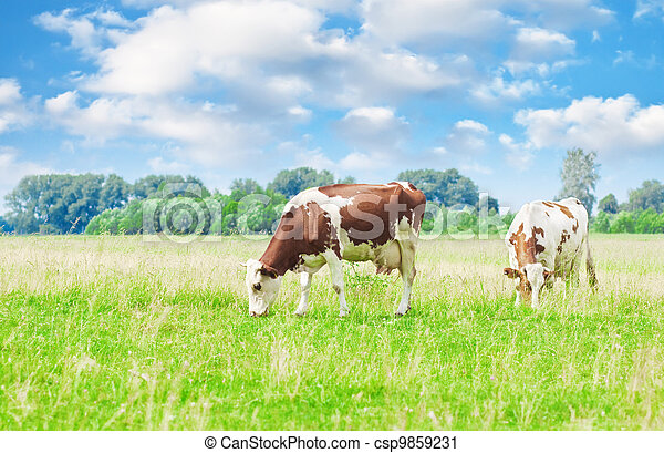 vacas, pastar - csp9859231