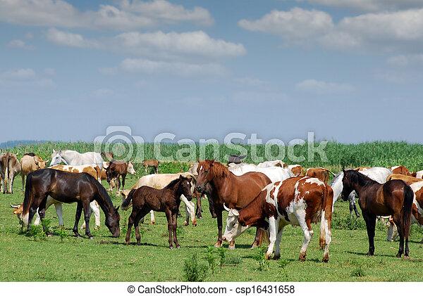vacas, pasto, caballos - csp16431658