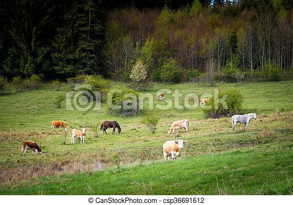 vacas, pasto, caballos - csp36691612