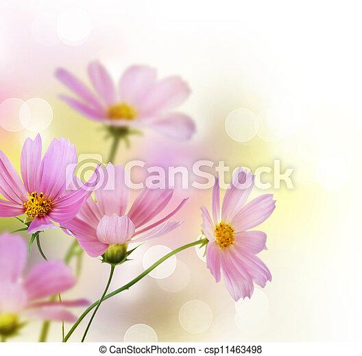 vacker, border., över, design, blommig, vita blommar - csp11463498