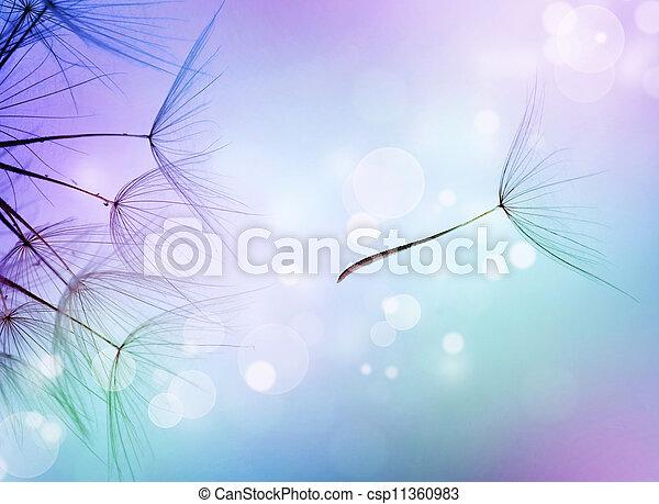 vacker, flygning, abstrakt, frö, maskros - csp11360983